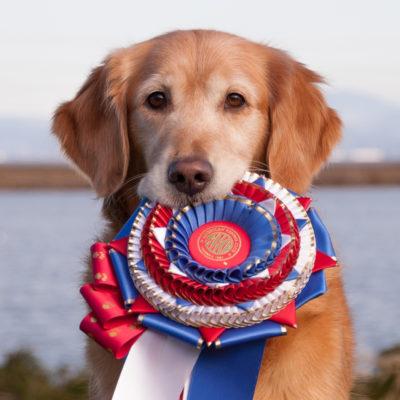 Dd S Dog Training